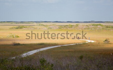 Two cyclists riding track in Everglades Stock photo © backyardproductions