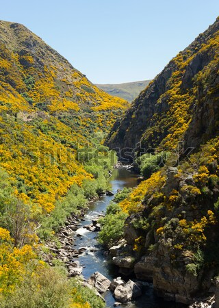 Railway track up Taieri Gorge New Zealand Stock photo © backyardproductions