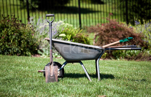 Wheelbarrow and spades Stock photo © backyardproductions