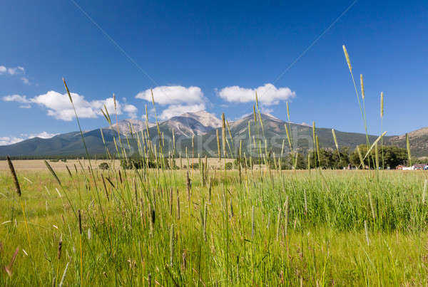 Farmyard and grasses by Mt Princeton CO Stock photo © backyardproductions