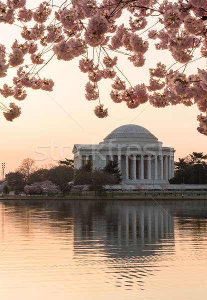 Stock photo: Cherry Blossom and Jefferson Memorial at sunrise