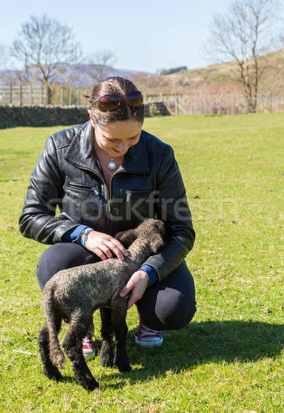 Side view of Shropshire lamb in meadow Stock photo © backyardproductions