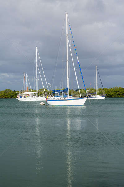 Yachts moored in no name harbor florida Stock photo © backyardproductions