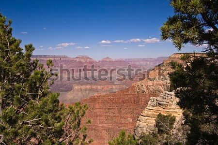 Overview of a Grand Canyon valley framed by trees Stock photo © backyardproductions