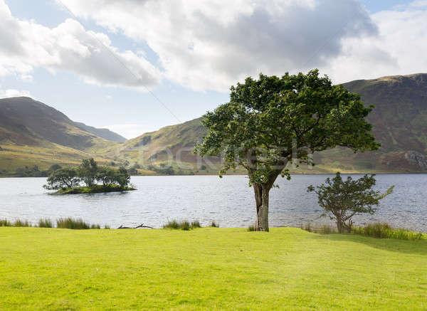 Ver água passado árvores ilha Foto stock © backyardproductions