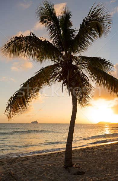 Cruiseschip bladeren zonsondergang verleden boom zee Stockfoto © backyardproductions