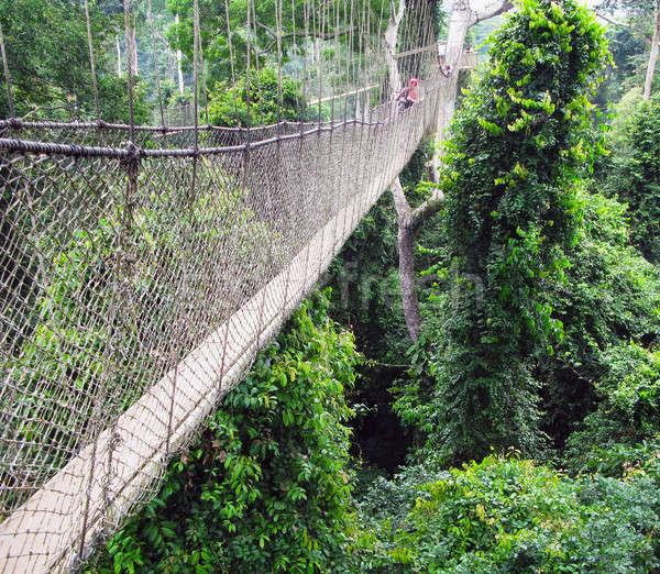 Aerial walkway at Kakum in Ghana Stock photo © backyardproductions