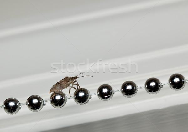 Stink bug walking on xmas decorations Stock photo © backyardproductions
