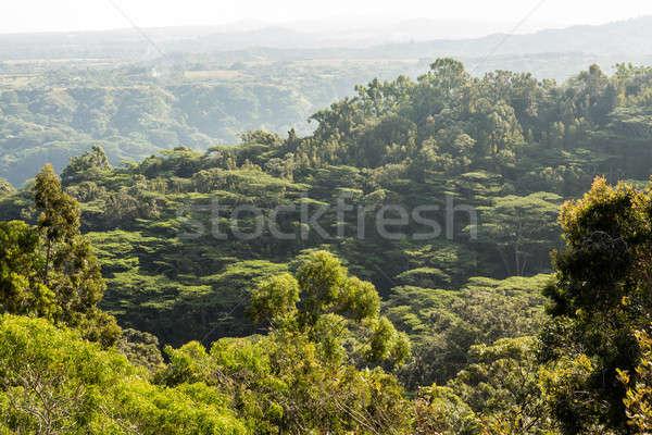 View of jungle from Okolehao Trail Kauai Stock photo © backyardproductions