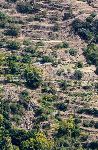 スペイン フィールド 木 ネバダ州 山 ストックフォト © backyardproductions