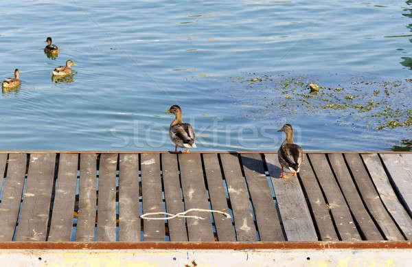 Quai Belgrade natation eau nature bleu Photo stock © badmanproduction