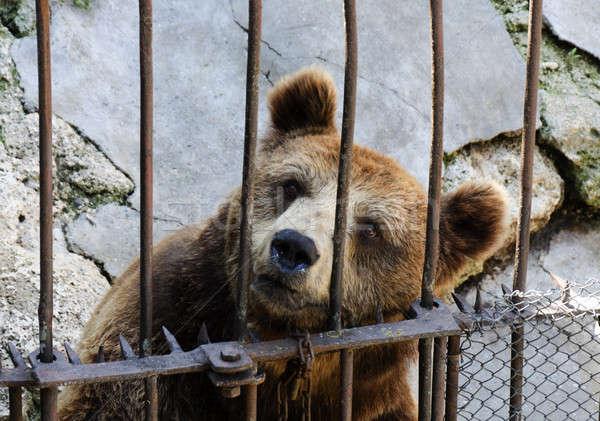 Locked bear Stock photo © badmanproduction