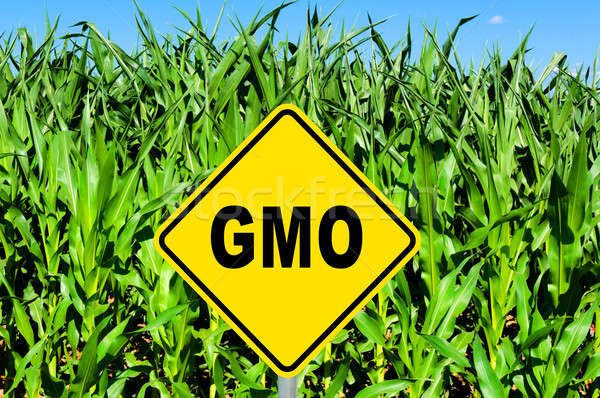 GMO sign Stock photo © badmanproduction