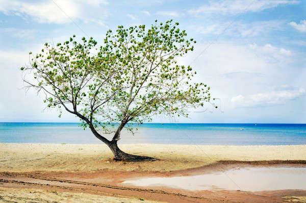 árvore praia céu natureza paisagem beleza Foto stock © badmanproduction