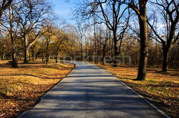 Bois route droite arbre herbe forêt Photo stock © badmanproduction