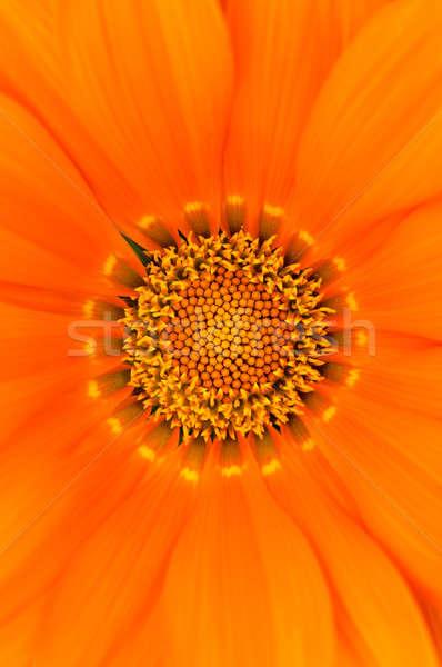 Pólen flor foco feliz abstrato jardim Foto stock © badmanproduction