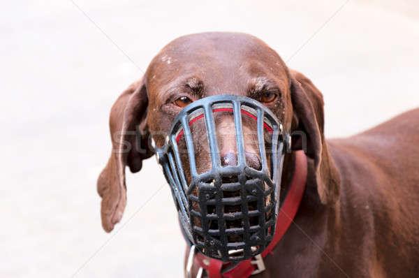 печально собака защиту маске волос молодые Сток-фото © badmanproduction