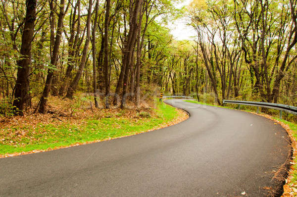 Autumn road Stock photo © badmanproduction