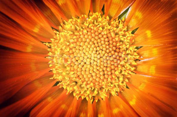 Virágpor makró citromsárga virág textúra háttér Stock fotó © badmanproduction
