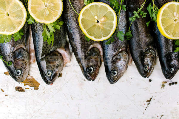 Trout fish Stock photo © badmanproduction