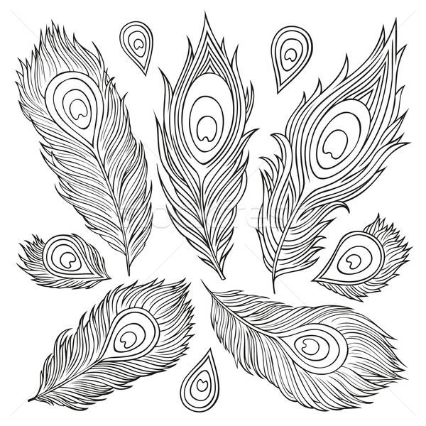 Vintage Feather vector set. Hand-drawn illustration. Stock photo © balabolka