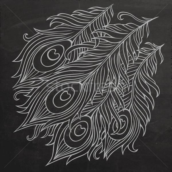 Peacock feathers chalkboard vector Stock photo © balabolka