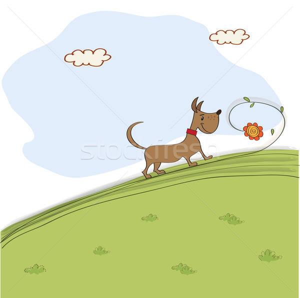 Bonitinho cão flor prado primavera natureza Foto stock © balasoiu
