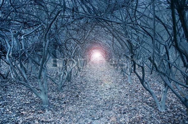 Surreal arch-like trees in a muted dreamlike woods Stock photo © Balefire9