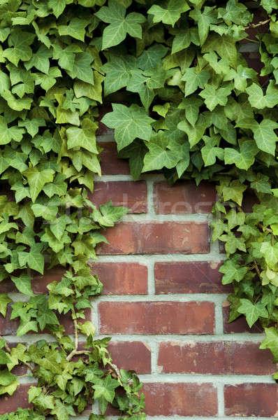 Sarmaşık kırmızı tuğla duvar etrafında doğa yaprak Stok fotoğraf © Balefire9