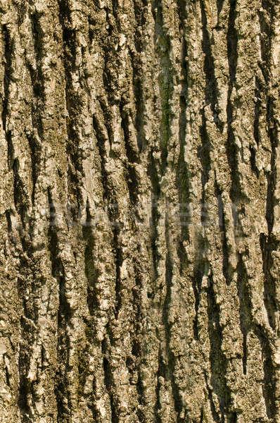 Drzewo kory bezszwowy tekstury Zdjęcia stock © Balefire9