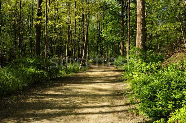 Kirándulás út erdő Stock fotó © Balefire9