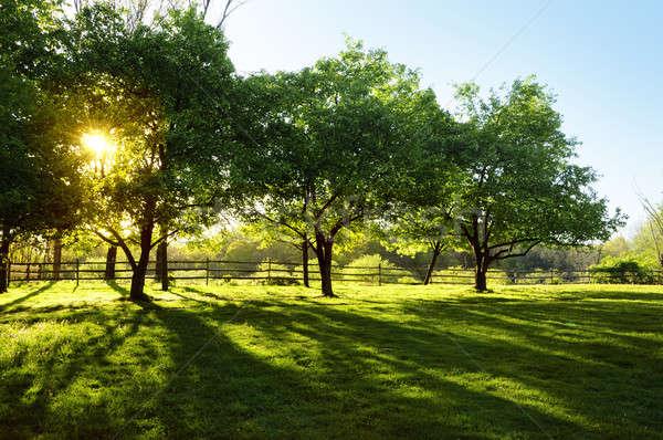 Sol brilhante árvores fazenda pôr do sol Foto stock © Balefire9