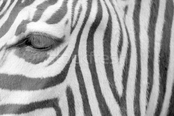 Zèbre oeil nature fond Afrique noir Photo stock © Bananna