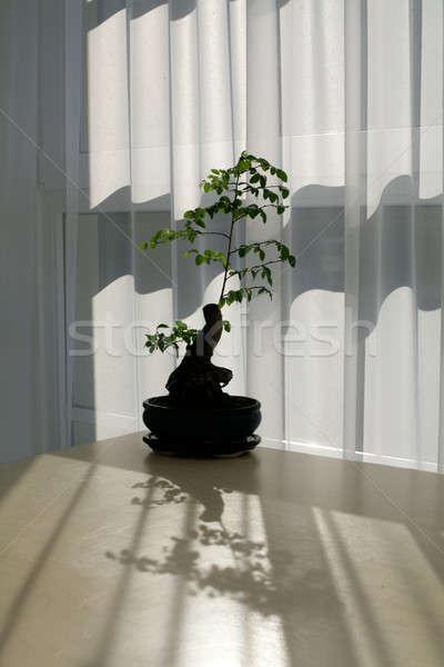 бонсай дерево таблице зеленый занавес китайский Сток-фото © Bananna