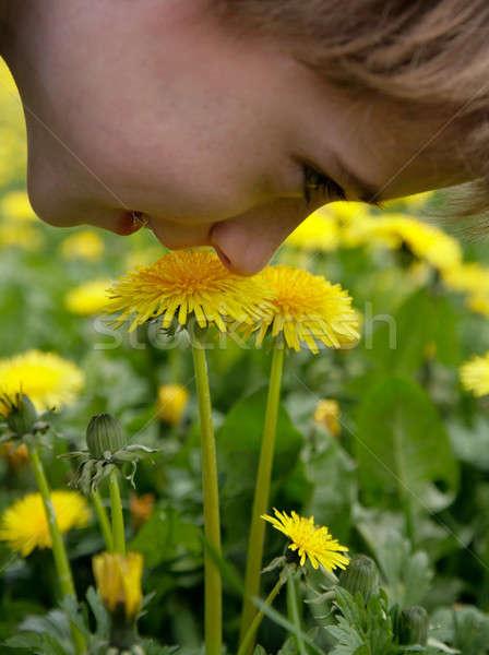 Olor diente de león flor hierba verano nino Foto stock © Bananna