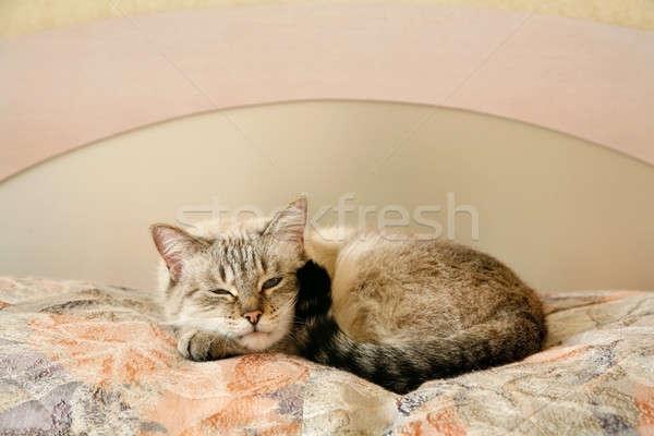 ленивый кошки спальня спальный комнату отель Сток-фото © Bananna