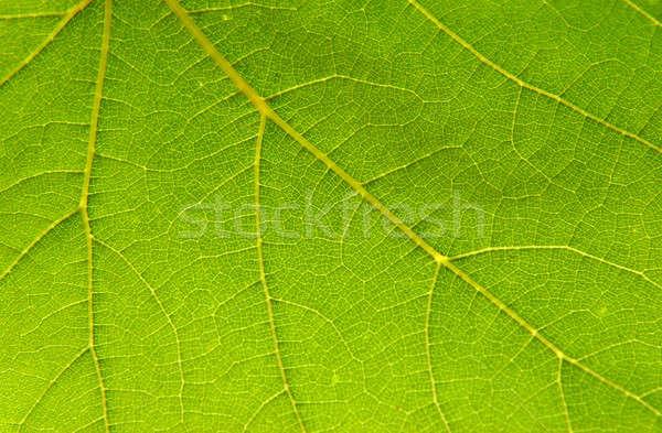 Vert printemps feuille fond wallpaper Photo stock © Bananna