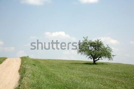 夏 風景 雲 自然 フィールド 緑 ストックフォト © Bananna