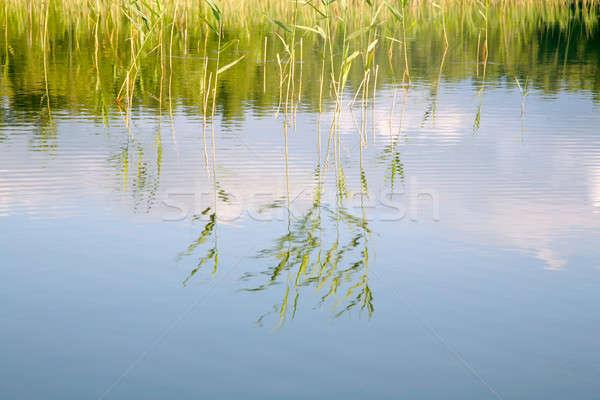 成長 湖 水 草 美 ストックフォト © Bananna