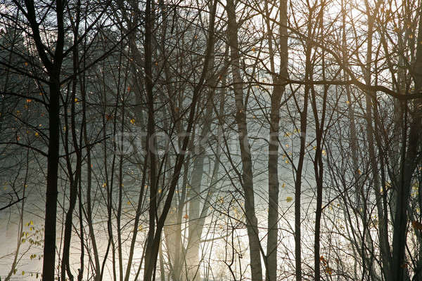 Winter forest in the morning fog Stock photo © Bananna