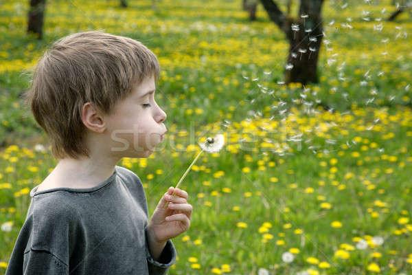 子供 花 草 自然 夏 ストックフォト © Bananna