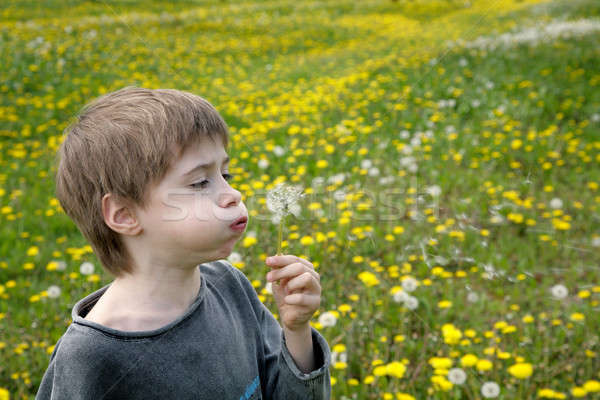 белый одуванчик цветок трава природы лет Сток-фото © Bananna