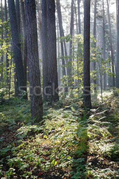 осень лес природы зеленый завода тень Сток-фото © Bananna