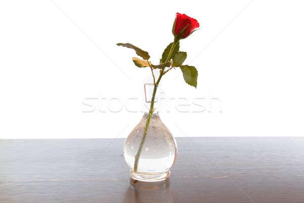 Kırmızı gül sevmek gül hediye bitki sunmak Stok fotoğraf © Bananna