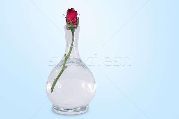 красную розу чаши закрыто цветок фон красный Сток-фото © Bananna