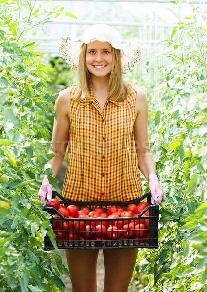 Rich Tomato Harvest Stock photo © barabasa