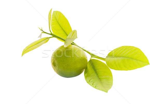 Lime Stock photo © barabasa