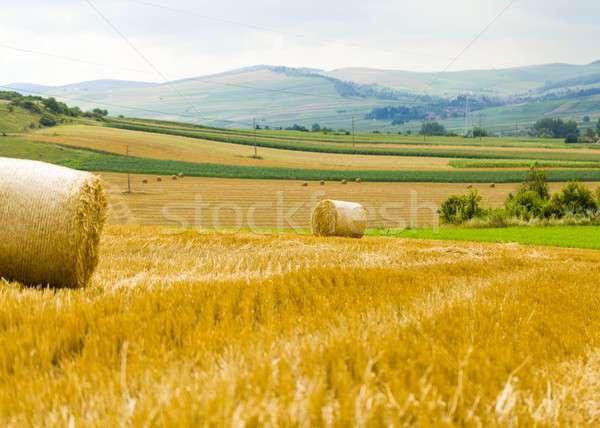 Rural work and production Stock photo © barabasa