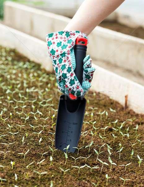 Spring Gardening Works Stock photo © barabasa