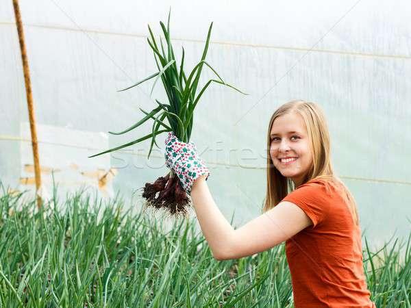 Cebolla cultura sonriendo jardinero manos sonrisa Foto stock © barabasa